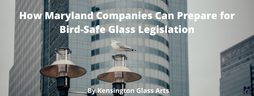 How To Prepare for Bird-Safe Glass